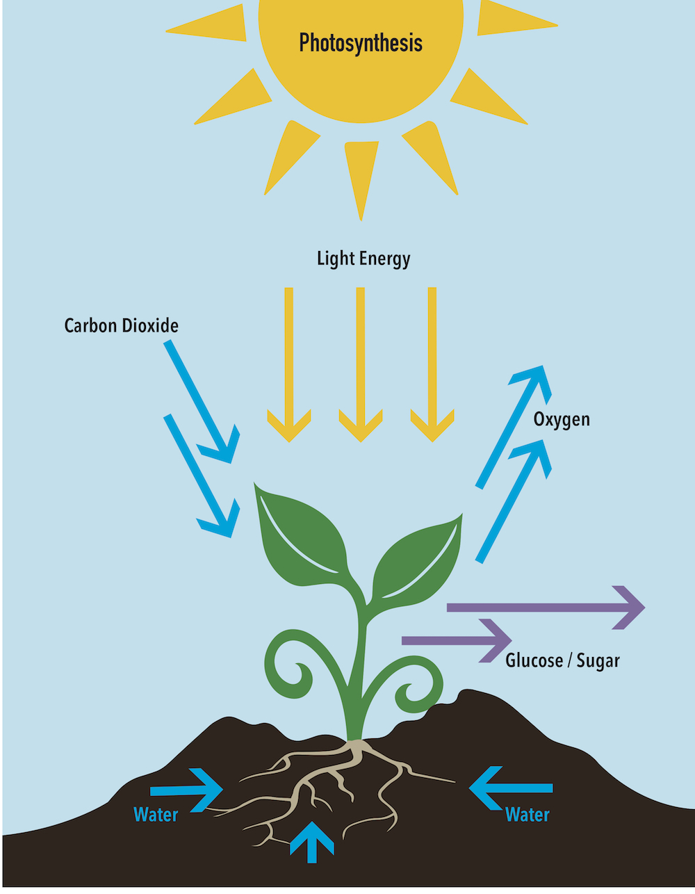 carbon dioxide and photosynthesis Definitions of photosynthesis and respiration photosynthesis is a process in photoautotrophs that converts carbon dioxide into organic compounds in the presence of.